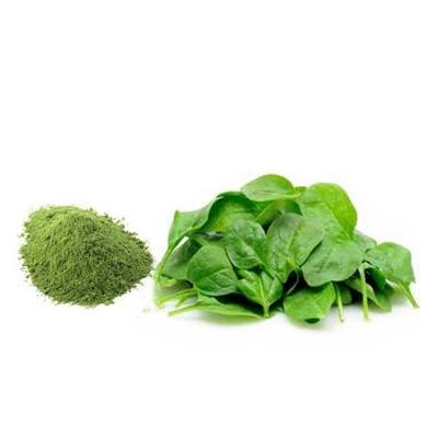 Spinach Powder - Dehydrated